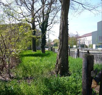 Grünfläche gegenüber vom Kupferbau (Bild: Bunte Wiese)