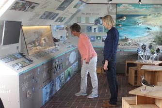 Der Ausstellungsraum der Naturstation - Foto: NABU / C. Harrje