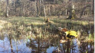 Die reaktivierte Flachwasser-Senke, umgeben mit wunderschönen Alteichen