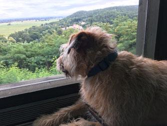 Panoramablick verglaste Veranda auch für Hunde ein Ausguck Oderbruch-blog.de
