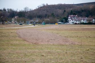 Wiese im Wiesental mit ungemähtem Grünstreifen (Foto: B. Budig)