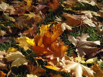 Herbstlaub - Foto: NABU/M.Gräwe