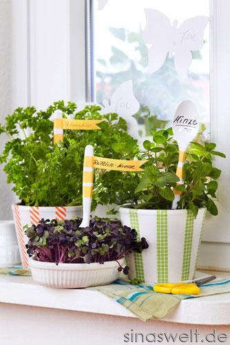 Mein DIY Kräutergarten in der Küche - Plus: Wirkung von ...