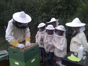 Das Bienenvolk wird für die Ameisensäurebehandlung vorbereitet. - Foto: Britta Raabe