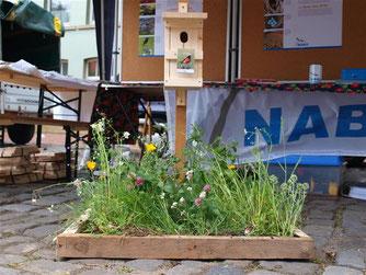 Die unterschiedlichsten Wiesenblumen wie Vergissmeinnicht, Kamille, Klee und Ehrenpreis blühen unter einer frisch zusammengebauten Nisthilfe. - Foto: Kathy Büscher