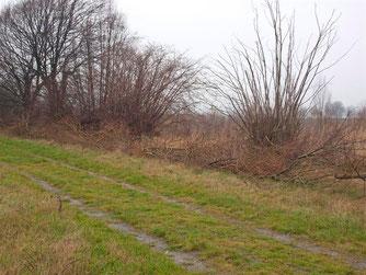 Die Äste dienen als neue Schutzzone für Tiere, hier entlang des Rundweges. - Foto: Kathy Büscher
