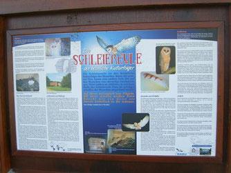 Hier gibt es Informationen über unsere heimische Schleiereule. - Foto: Kathy Büscher