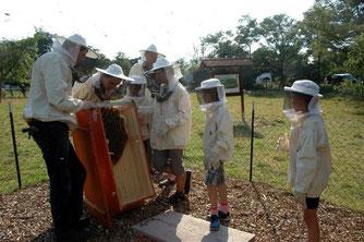 Die geöffnete Bienenkiste. Es ist viel einfacher die Größe eines Bienenvolkes zu erfassen. - Foto: Britta Raabe