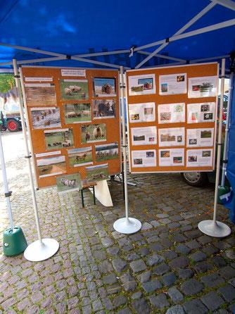 Foto-Ausstellung über das Beweidungsprojekt beim Bauernmarkt. - Foto: Kathy Büscher