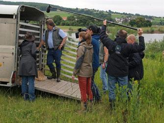 Das Filmteam begleitet den Weideauftrieb weiterer Tiere in der Auenlandschaft. - Foto: Kathy Büscher