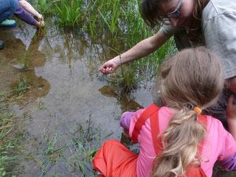 Am Teich gibt es für die kleinen Naturschützer viel zu entdecken. - Foto: Maren Matzeik