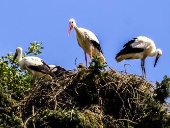 Vielleicht wird das neue Nest am Hainekamp bald auch bezogen. - Foto: Kathy Büscher