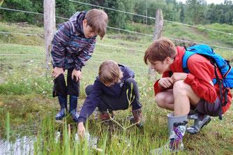 Auch die Kinder versuchten vorsichtig eine der flinken Unken zu fangen. - Foto: Britta Raabe