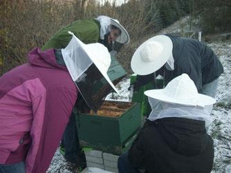 Auch das Bienenvolk in der Magazinbeute wird gegen die Varroa-Milbe behandelt. - Foto: Britta Raabe