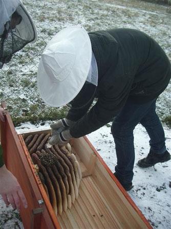 Nach der Freude, das es den Bienen in der Bienenkiste gut geht, werden sie von der NAJU mit Oxalsäure gegen die Varroa-Milbe behandelt. - Foto: Britta Raabe