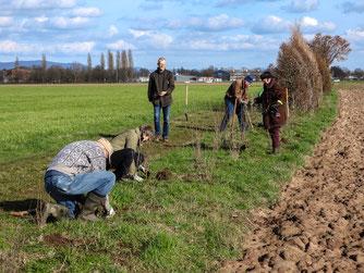 Die Heckenpflanzung in den Rintelner Wiesen fand im März statt. - Foto: Kathy Büscher