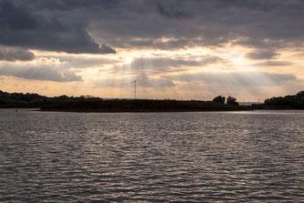 Blick vom Boot auf die Vogelinsel mit dem Fischadlerhorst. - Foto: Kathy Büscher