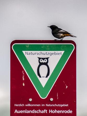 Das Naturschutzgebiet ist für viele Vogelarten ein Refugium. - Foto: Kathy Büscher