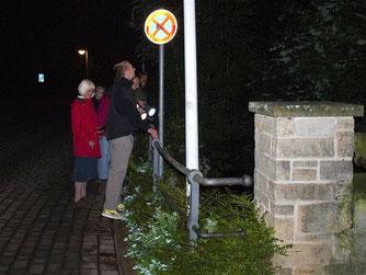 Fledermauswanderung am Blumenwall. - Foto: Kathy Büscher