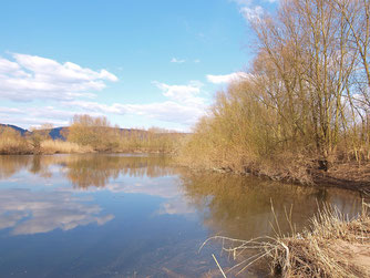 Die Auenlandschaft Hohenrode. - Foto: Kathy Büscher