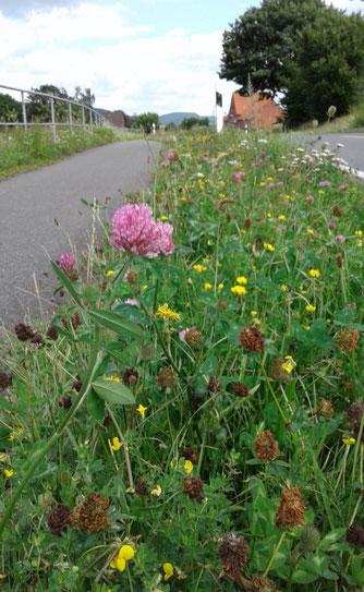 Bunte Pflanzenvielfalt zwischen Radweg und Straße. - Foto: Maria Rollinger