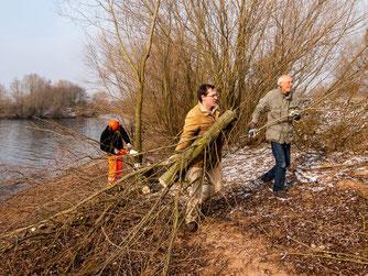 Die Uferbereiche werden von Weidenaufwuchs befreit. - Foto: Kathy Büscher