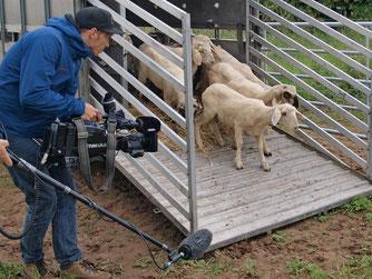 Das Filmteam in der Auenlandschaft. - Foto: Kathy Büscher
