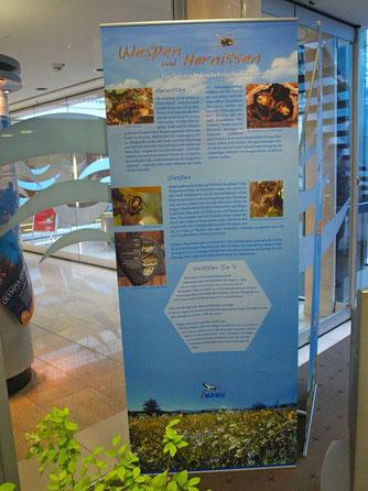 Die Ausstellung informiert unter Anderem über Wespen und Hornissen. - Foto: Kathy Büscher