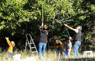 Mit Apfelpflückern geht es in die Bäume. - Foto: Kathy Büscher