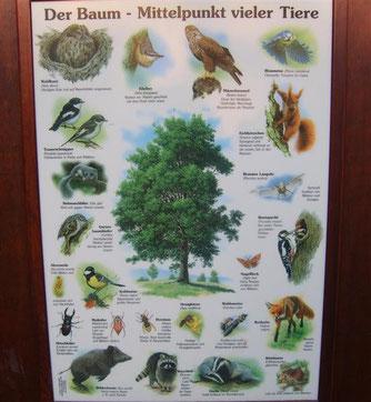 Welche Tiere bevorzugen den Baum als Lebensraum? - Foto: Kathy Büscher