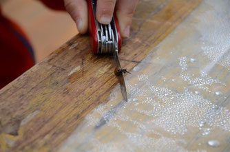 Schnecken können, ohne sich zu verletzen, über Messer und Rasierklingen schleimen. - Foto: Britta Raabe