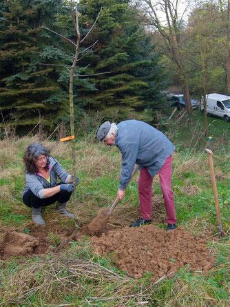 Für die neuen Bäume müssen große Löcher gebuddelt werden. - Foto: Kathy Büscher