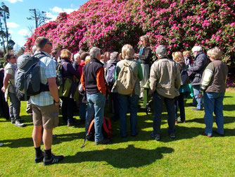 In den Lost Gardens of Haligan begeistern meterhohe Rhododendren die Reisenden. - Foto: Kathy Büscher