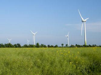 Windräder sind ein Symbol für die nötige Energiewende, aber aus naturschutzfachlicher Sicht nicht an jeder Stelle sinnvoll. - Foto: Kathy Büscher