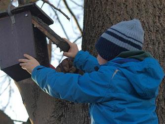 Beim Öffnen des Kastens ist Vorsicht geboten. Im Winter finden sich oft andere Gäste wie Mäuse in den Kästen ein. - Foto: Kathy Büscher
