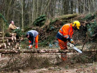 Die fleißigen Helfer des NAB auf der Streuobstwiese. - Foto: Kathy Büscher