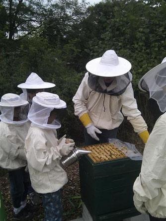 Ein wenig Rauch in das Volk treibt die Bienen nach unten und die Säure kann ohne Gefahr aufgetragen werden. - Foto: Britta Raabe