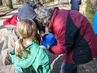 Am Waldkater hat die NAJU Molche gesammelt und bestimmt. - Foto: Kathy Büscher