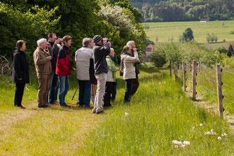 Die Besucher am Rundweg beobachten die Weidetiere. - Foto: Kathy Büscher