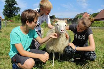 Auch Schafe gab es auf dem Woldenhof. - Foto: Britta Raabe