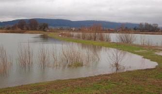 Das Hochwasser formt die Uferbereiche ständig neu. - Foto: Kathy Büscher