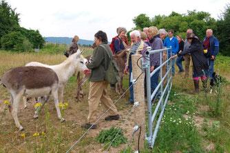 Die zahmen Esel freuen sich über Streicheleinheiten. - Foto: Kathy Büscher