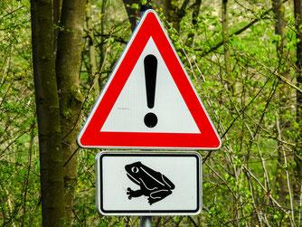 Amphibien Amphibienschutz Wald
