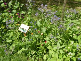 Foto: Blühstreifen im Rohrer Park, M. Ruland