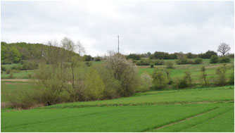 (C)NABU Lippe: Terrassenlandschaft am Hohen Asch