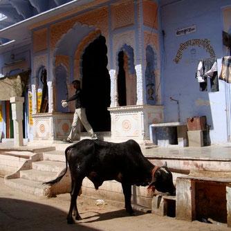 Pushkar Dorf Rajasthan