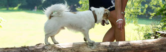 Hundefitness, Canicross, Caniwalk, Hundetraining, Hundeschule, Butzbach, World of Dogs, Fitness