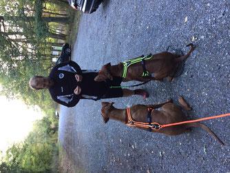 Hundefitness, Canicross, Caniwalk, Hundetraining, Hundeschule, Butzbach, World of Dogs, Fitness