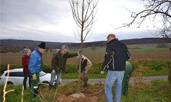 Mit vereinten Kräften wird die Ess-Kastanie gepflanzt. FOTO: DWZ/sto