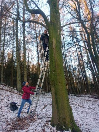 bei schönem Wetter bring Claus Wittke einen Nistkasten am Baum an. Naturschutz macht Freude und ist sinnvoll. ( nabu-e)